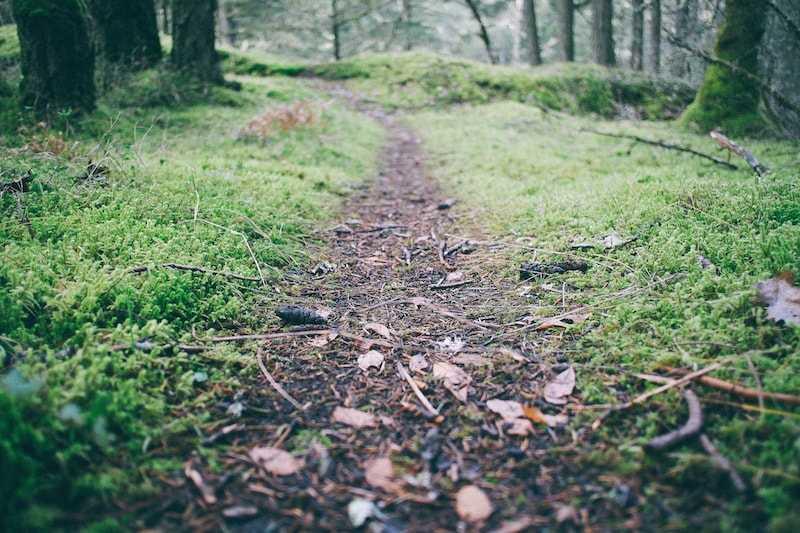 Đường mòn ven rừng tạo điều kiện cho bé đạp xe đạp địa hình trẻ em