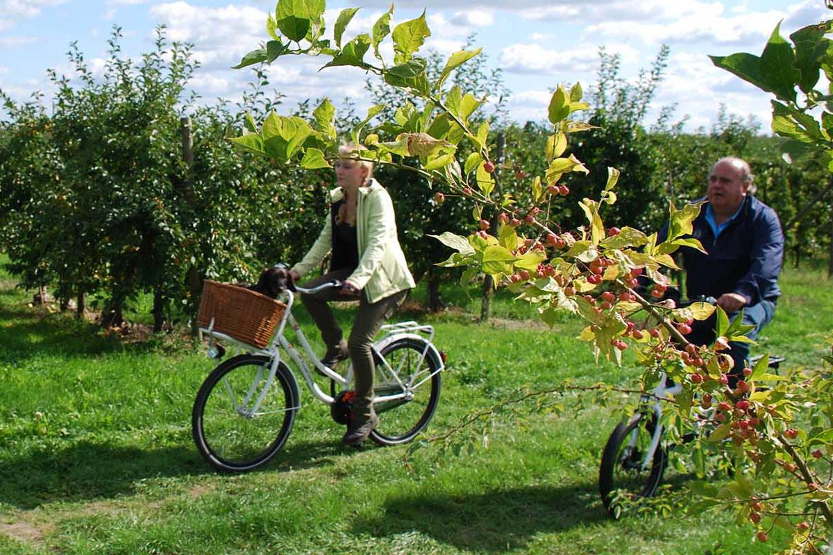 Hai người bạn lớn tuổi cùng nhau đạp xe đạp thể thao giữa hàng cây xanh
