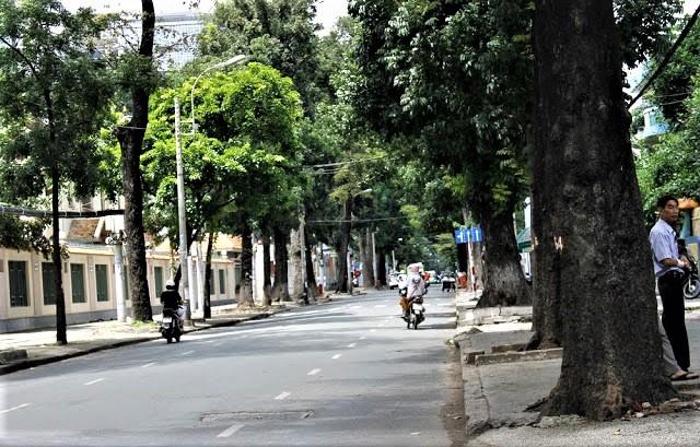 Hàng cổ thụ đầy sức sống trên đường Nguyễn Đình Chiểu