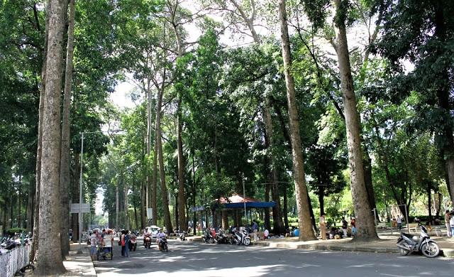 Con đường Trương Định mát mẻ giữ nắng trưa
